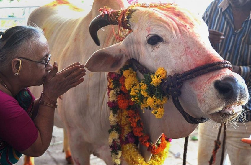 Cow is the symbol of consciousness