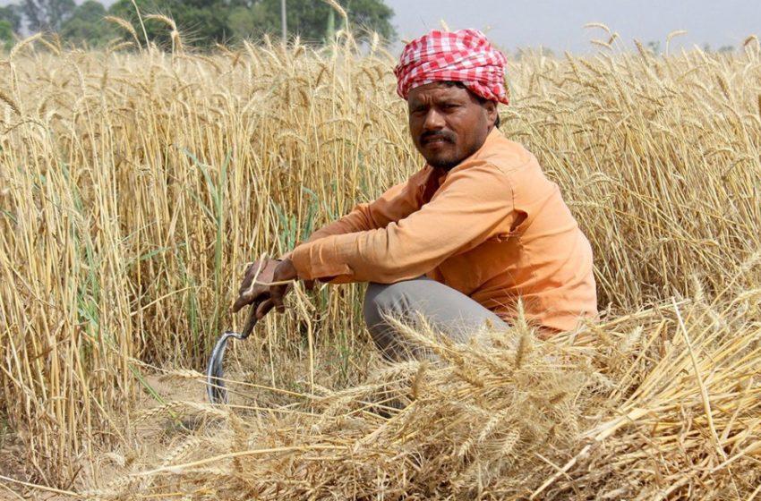 New agricultural paradigm